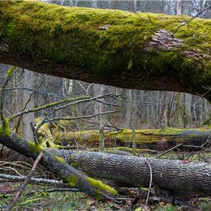 grönt kort skogsstyrelsen