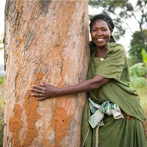 rörvik timber tvärskog ab